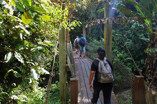 Kawang Forest Reserve Trekking