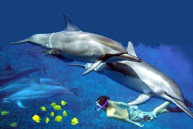 Kona Shore Excursion: Wild Dolphin - Reefs -Sea Caves -Kealakekua Bay Snorkel
