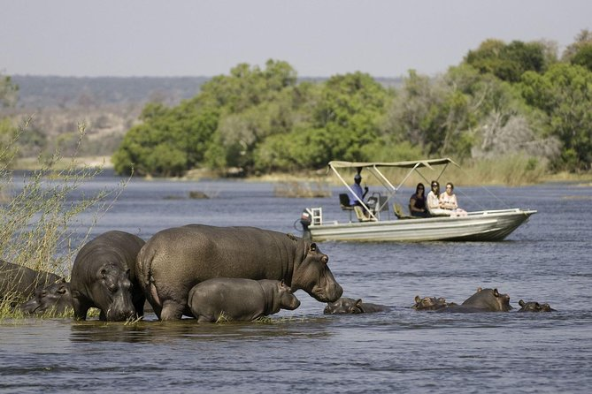 Chobe Extended Day Trip from Victoria Falls