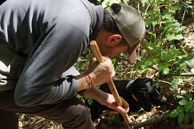 Searcing for truffles: black or Scorzone