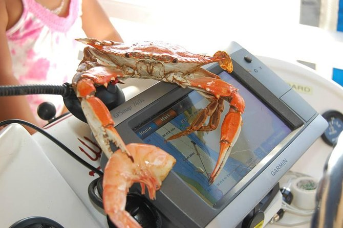 Steamed Blue Crab Cruise