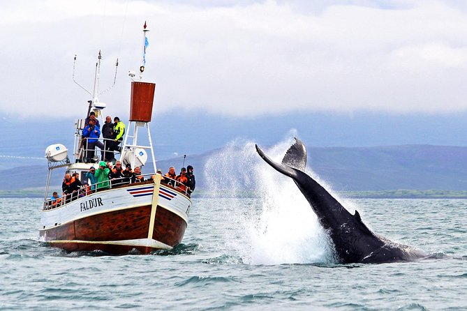 Traditional Whale Watching Tour from Húsavík photo 1