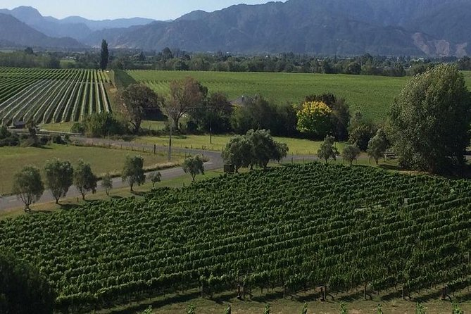 Half-Day Marlborough Gourmet Tasting Tour from Blenheim