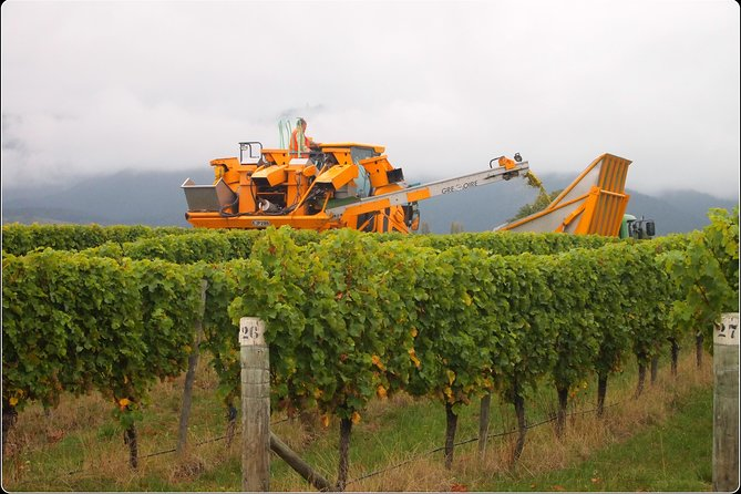 Full-Day Wine Gourmet and Scenic Delight Tour of Marlborough from Picton