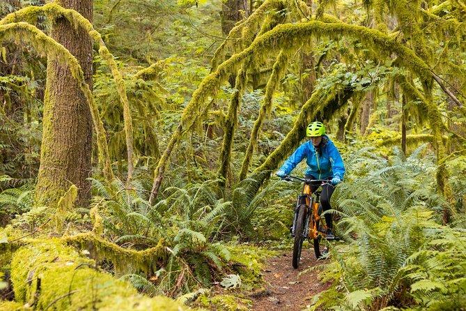 Half-Day Guided Mountain Bike Tour