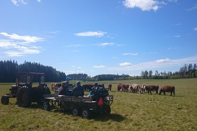 Saying hello to the cows on the summer pasture