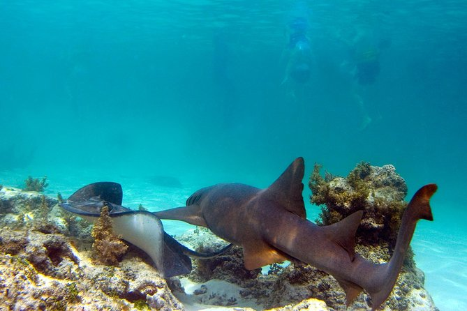Shark and Stingray Snorkel Tour in Punta Cana