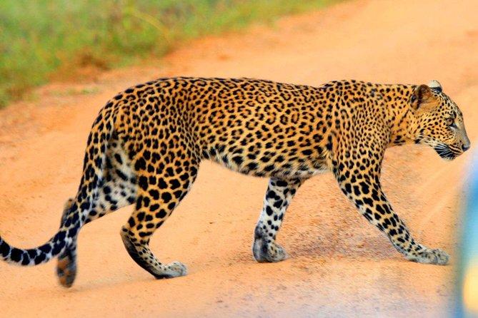 Yala Safari Private Day Trip from Bentota and Kalutara Areas