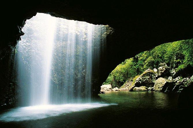 Natural Bridge & Springbrook Waterfalls Tour