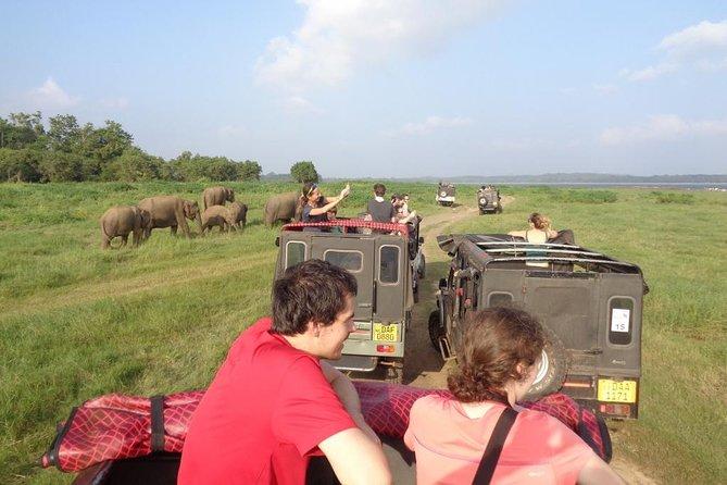 Minneriya Park Elephant Gathering Private Jeep Safari from SIGIRIYA