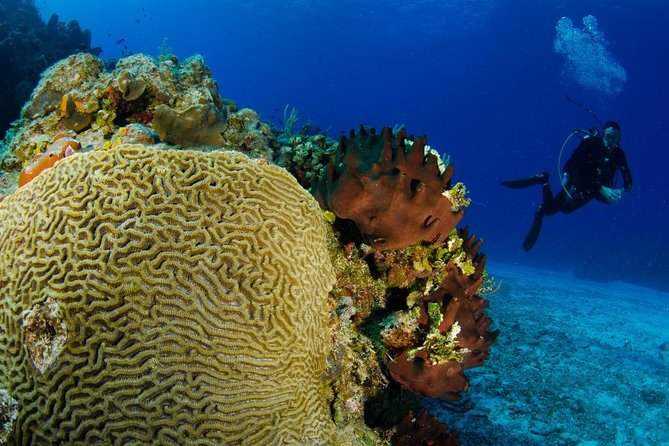 4-Hour Certified Scuba Diving Tour with Two Tanks in Cozumel