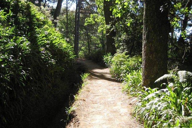 Caminhada pelas Levadas do Vale do Paraíso