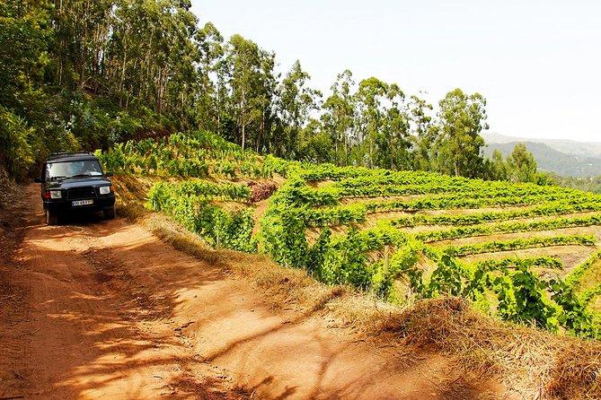 Half-Day Vineyards & Cliffs