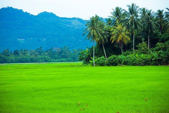 Private Half-Day Tour: Village Lifestyle at Balik Pulau