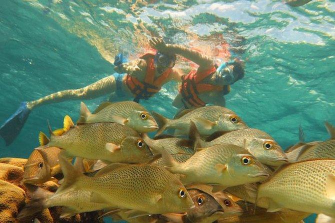 Half-Day Snorkeling Adventure in Puerto Morelos