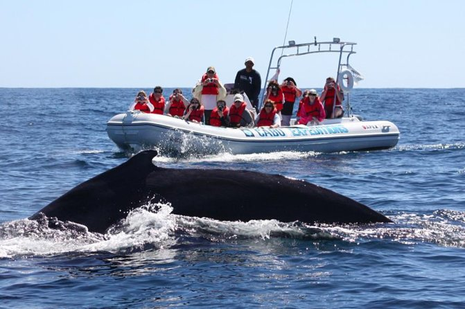 Zodiac Whale-Watching Adventure in Los Cabos