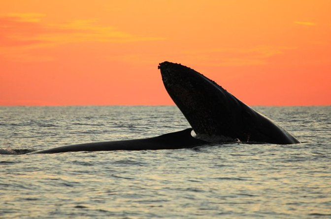 Whale-Watching Sunset Cruise in Los Cabos