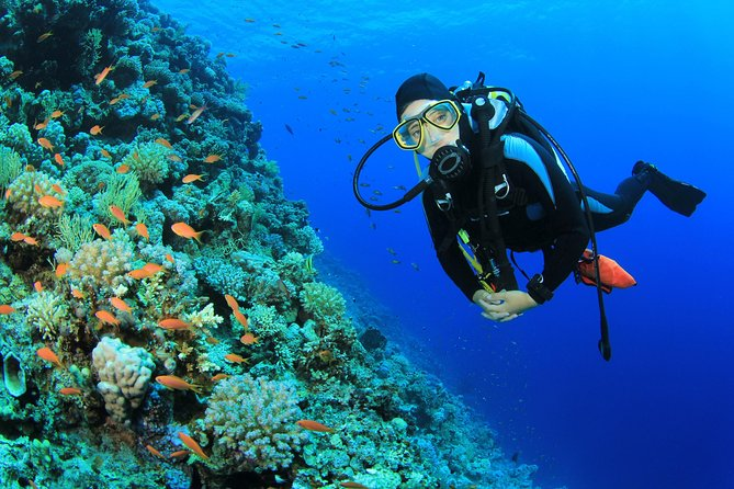 2-Tank Scuba Dive in St Lucia photo 1