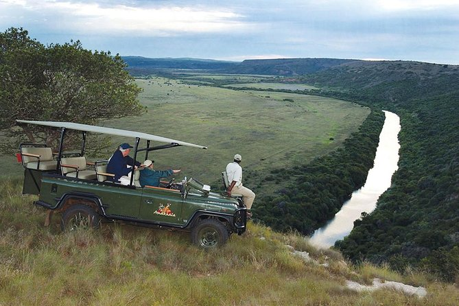 Port Elizabeth Shore Excursion: Amakhala Game Reserve