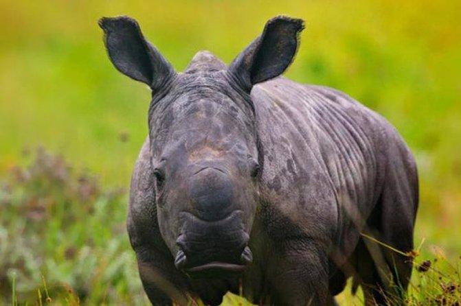 Kragga Kamma baby rhino