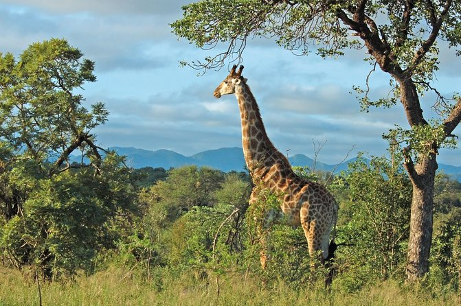 Full Day Hluhluwe Game Reserve Safari
