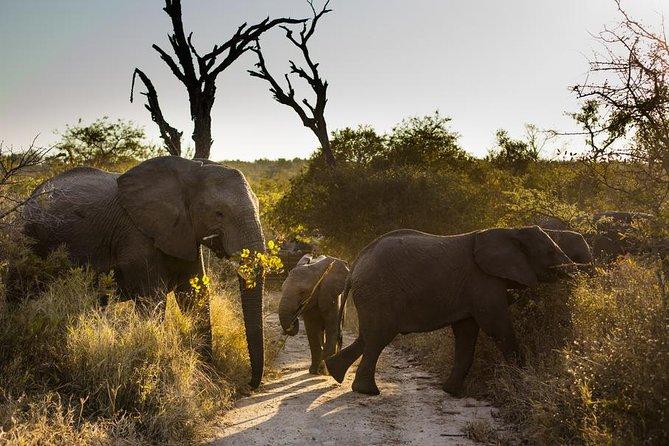Kruger National Park Afternoon Wildlife Safari | South ...