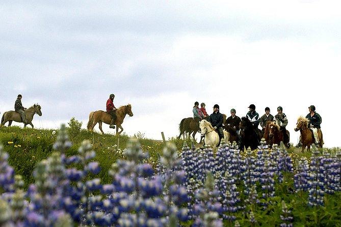 Icelandic Horseback Riding Day Tour at Laxnes Farm