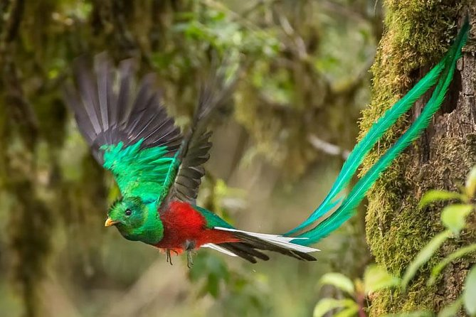 Bird watching tour in search of the Resplendet Quetzal