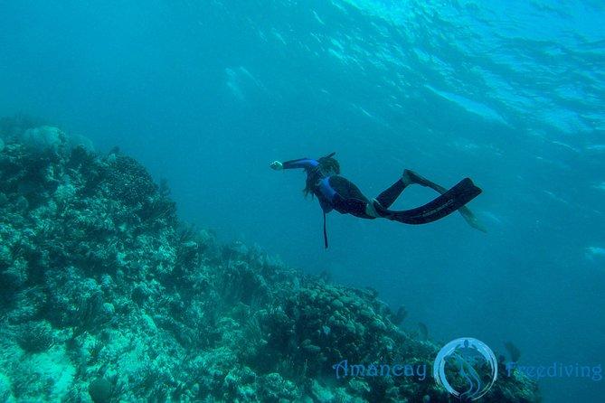 Playa del Carmen to Cozumel Full-Day Freediving Experience 2019