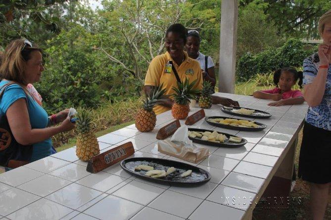 Croydon en las montañas Tour de plantación de piña de Montego Bay