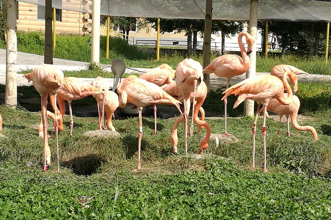 Private Full Day Tour to Harbin Beifang Forest Zoo and Optional Seafood Dinner