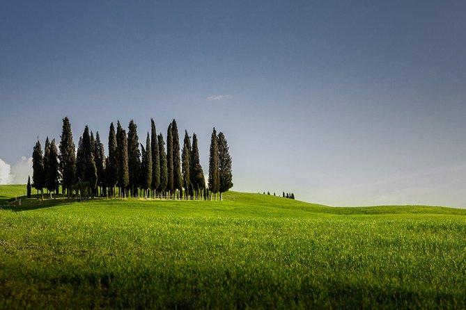 Excursión privada de un día al Valle de Orcia y Montepulciano desde Siena