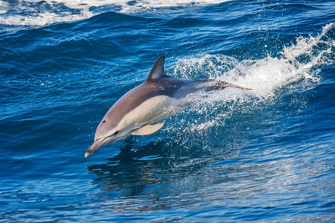 Dolphin Watching Tour and Güi Güi Beach