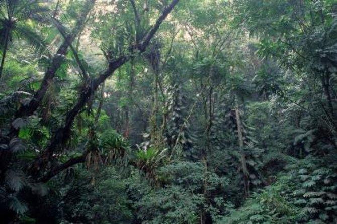 Excursão ecológica pela Floresta da Tijuca e pelo Jardim Botânico do Rio de Janeiro