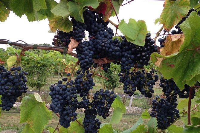 Vesterhavegaarden Vineyard and Wine shop Visit - Organically Produced