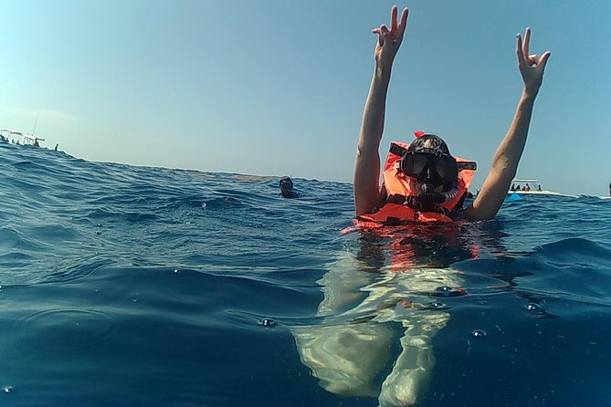 Exciting Swim with Whale Sharks Tour photo 3