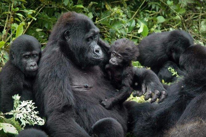 Gorilla trekking - 3 days