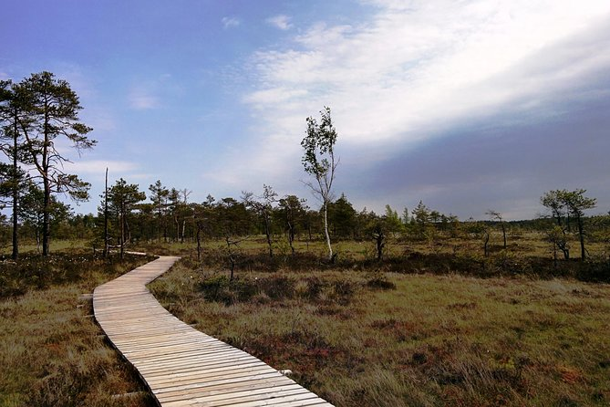 Bog Walk in Pärnu County
