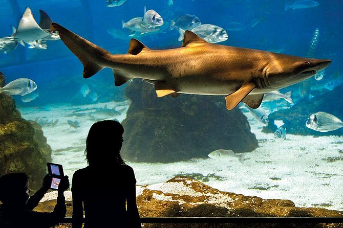 Skip the Line: Barcelona Aquarium Ticket
