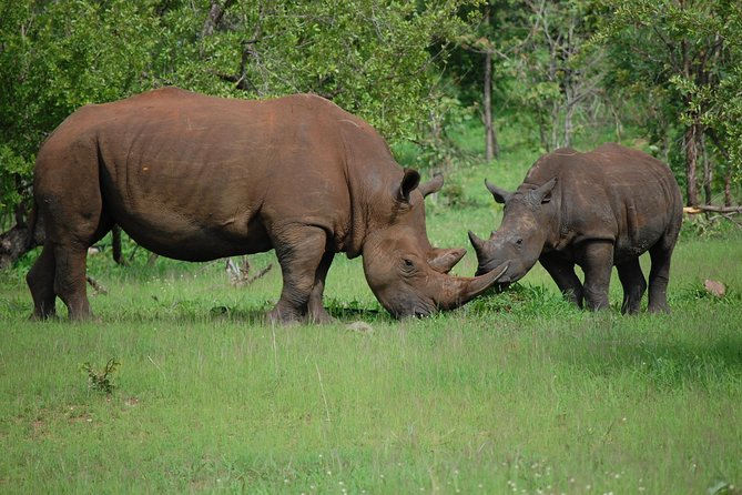 Rhinos mother and child