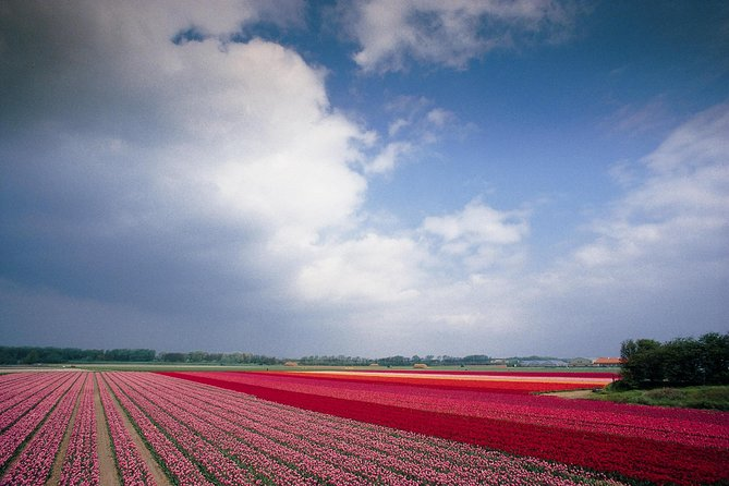 Half-Day Bus Tour to Keukenhof and Flowerfields & Canal Cruise
