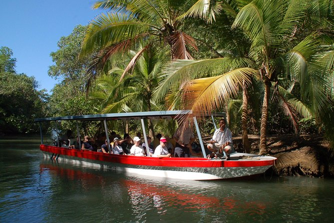Damas Island Mangrove Boat Tour from Jaco