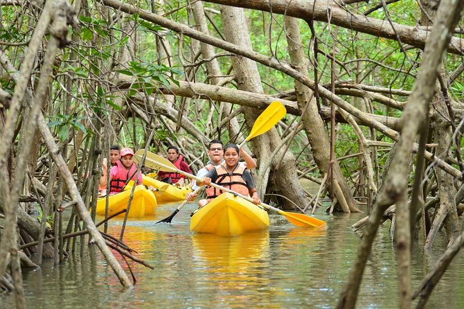 Damas Island Mangrove Kayaking Tour from Manuel Antonio