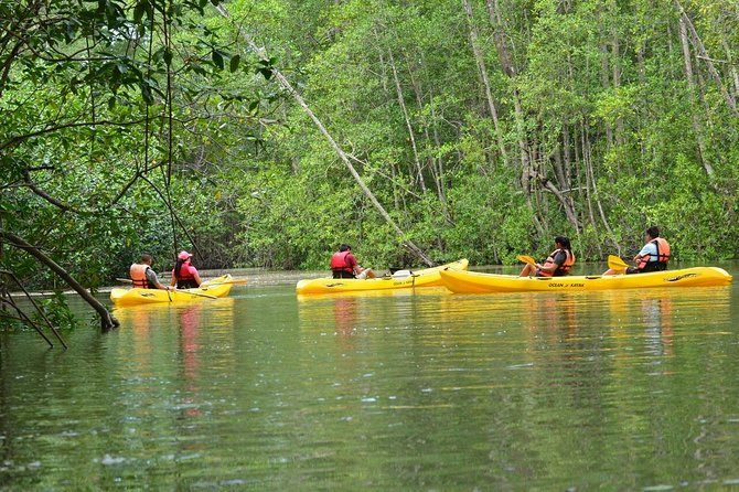 Damas Island Mangrove Kayaking Tour from Manuel Antonio photo 6