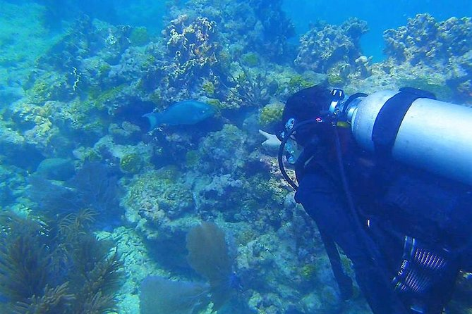 Scuba Diving Guided Tour from Big Pine Key