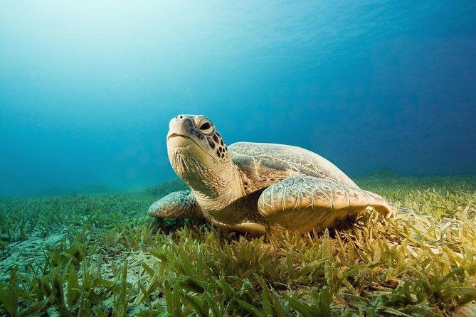 Eco Bay Cruise