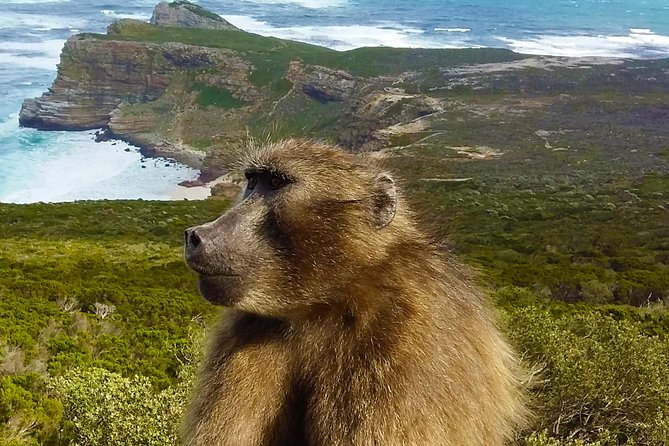 Full-Day Cape Point, Seal Island and Boulders Penguin Sanctuary Tour from Cape Town photo 1