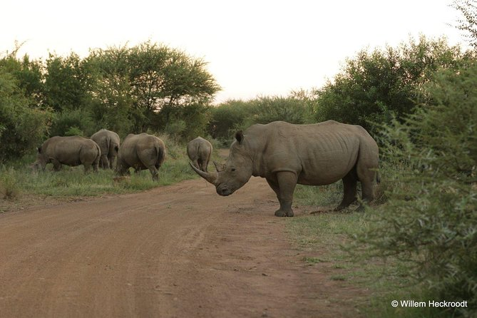 2 Day 4 Star Pilanesberg Safari Private transfer from Johannesburg or Pretoria