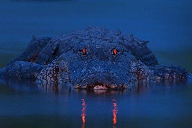 Alligatoren After Dark Tour