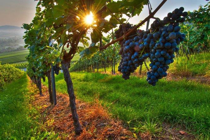 Recorrido vinicola privado: bodegas Maipo desde Mendoza, Mendoza, ARGENTINA